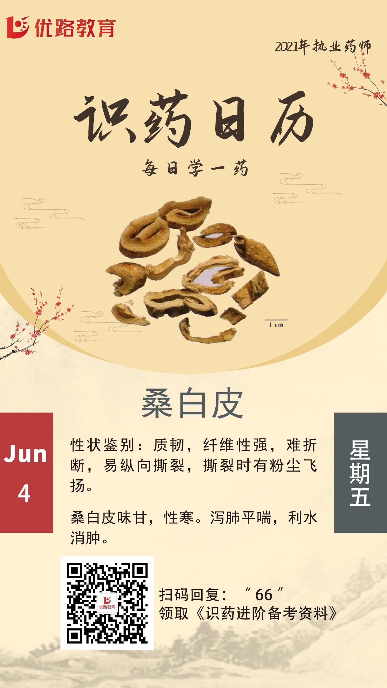 识药日历海报2-桑白皮.png